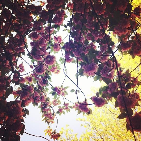 spring brooklyn